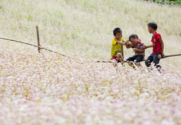 Ngẩn ngơ trước cánh đồng hoa tam giác mạch Hà Giang